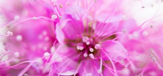 nature-fleurs-macro-007