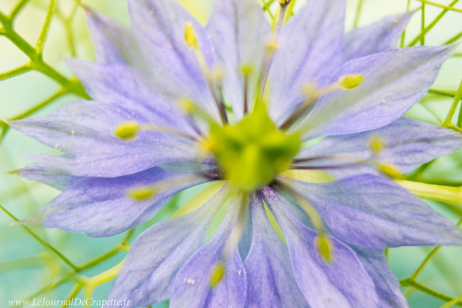 nature-fleurs-macro-010