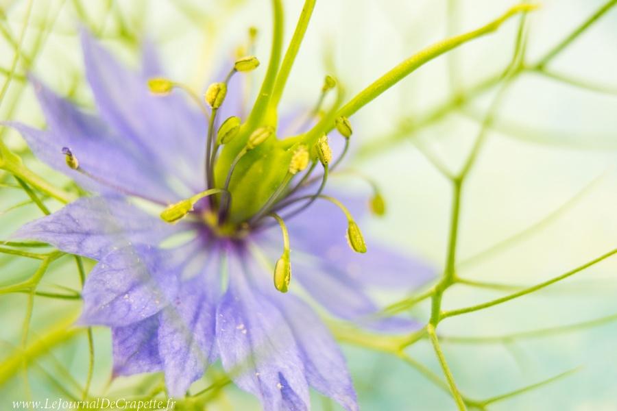 nature-fleurs-macro-014