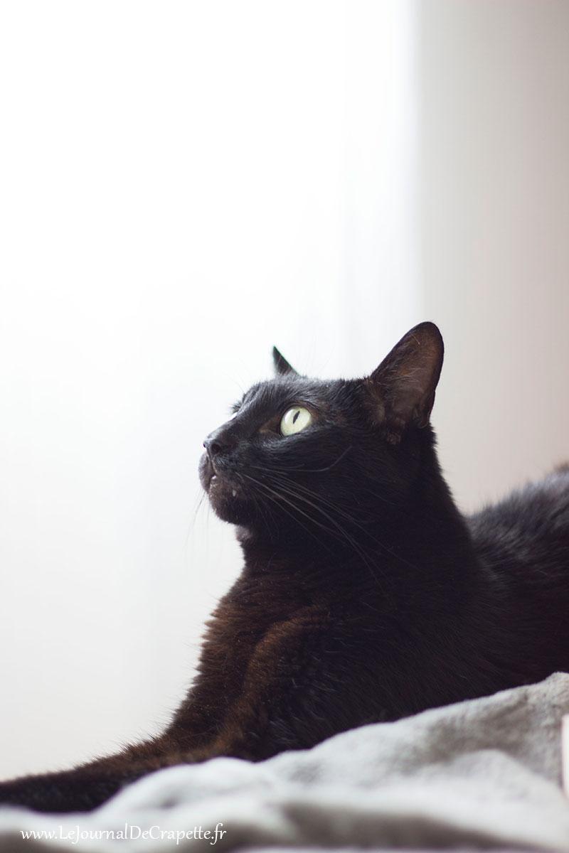 blogueuse a chat noir